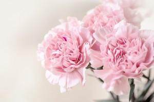 flowers-1390807__340